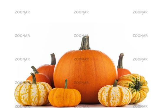 Harvested pumpkins on white