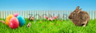 Bunte Ostereier im Garten zu Ostern als Header