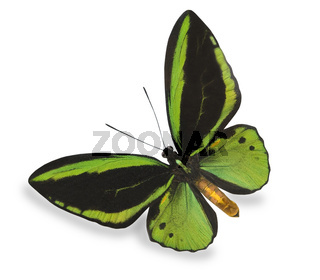 Green butterfly isolated on white
