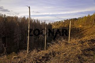 Waldsterben_08.tif