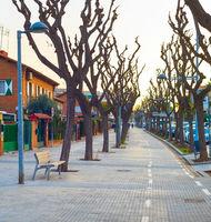 alley tree nobody Barcelona Spain
