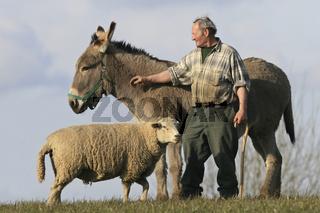 Mit Schaf und Esel