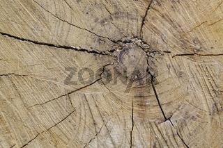 Baumscheibe mit Strukturen