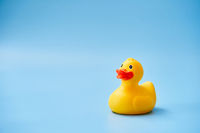 Isolated yellow rubber duck with a copy space on a blue background