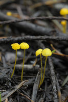 Mushroom on the forest floor, Vancouver Island, British Columbia, Canada
