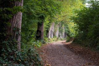 Landschaft 002. Windebyer Noor. Deutschland