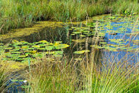 Wetland habitat with water lilies and other aquatic plants