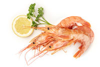 Overhead photo of raw shrimps on white, with parsley and a lemon slice, with copy space
