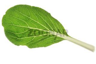 Pok Choi (Brassica rapa chinensis)