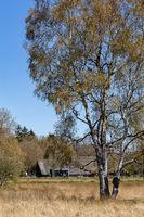 Nature reserve Dwingelderveld in Drenthe in the Netherlands