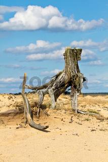 Abgestorbener Baum in Steppe