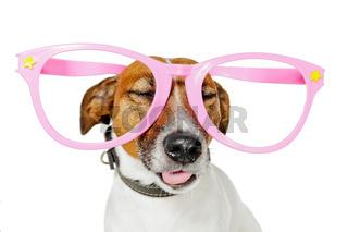 funny glasses dog