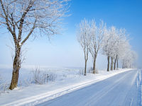 Road through snowy fields with snow covered trees in northern Germany