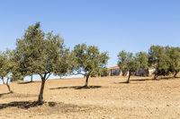 landscape in the Alentejo, Portugal