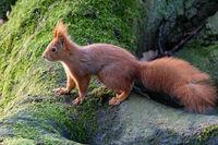 Eichhörnchen 59
