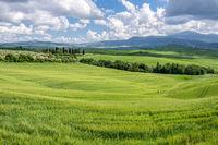 Verdant farmland in Val d'Orcia Tuscany