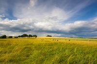 Summer landscape after a storm