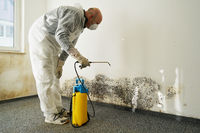 Specialist in the elimination of severe mold in an apartment