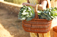 Crop woman with cabbage sitting on brick fence