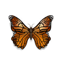 Beautiful colorful detailed realistic butterfly, aglais urticae on white