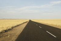 tar road