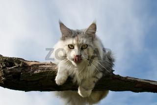 Katze auf Ast