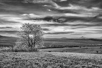 On the Grass Hillsides in Central Bohemian Uplands, Czech Republic.