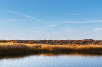 golden reed landscape and wind farm