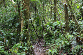 Pfad durch den Regenwald in Costa Rica