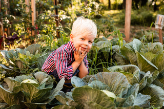 The baby boy with blond hair sitting between cabbages