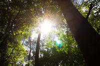 Sunray in the woods
