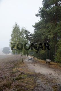 Heidelandschaft im Frühnebel, Westruper Heide , Haltern am See, Deutschland