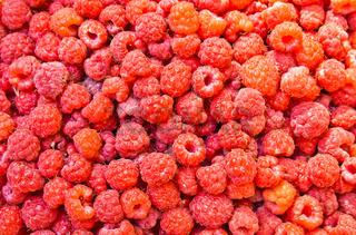 many fresh raspberry