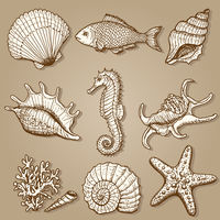 Sea collection. Original hand drawn illustration