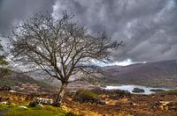 tree landscape clouds