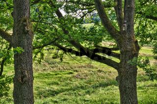 Sommer im Tal der grünen Bäume