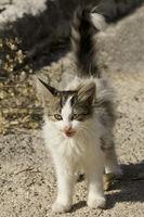 kitten on the road