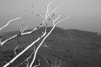 Tree on the top of the mountain