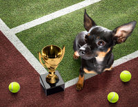 tennis player dog