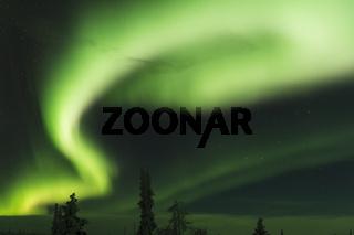 Nordlicht (Aurora borealis) ueber verschneiten Baeumen, Gaellivare, Lappland, Schweden