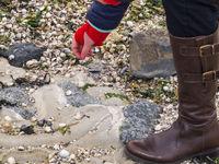 Collecting seashells on the beach