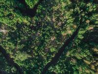 Wild river aerial drone shot