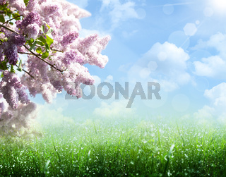 Abstract summer and spring backgrounds with lilac tree