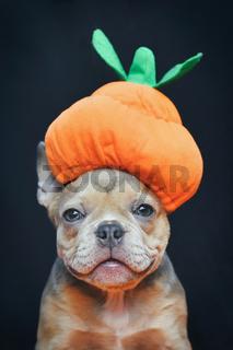 Halloween Hund. Französische Bulldogge Hundewelpe mit lustigem Kürbis Kostümhut