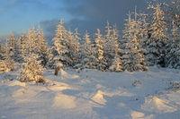 Winterwald bei Kaltenbronn
