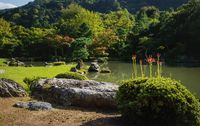 Blooming red spider lilies at traditional Japanese zen garden Sogenchi at Tenryu-ji Temple, Japan