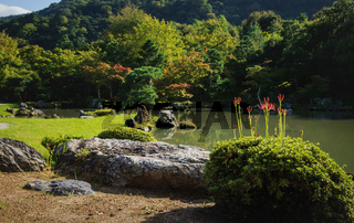 Blooming red spider lilies at traditional Japanese zen garden Sogenchi at Tenryu-ji Temple along pond in Kyoto, Japan