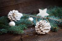 white fir cone and fir branch