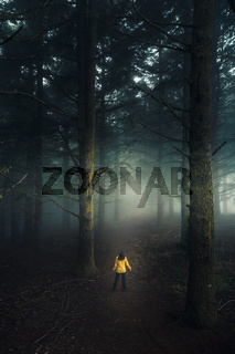 Walking in a forest on a foggy morning
