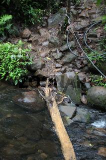 Regenwald in Costa Rica: kleine Hindernisse im Weg